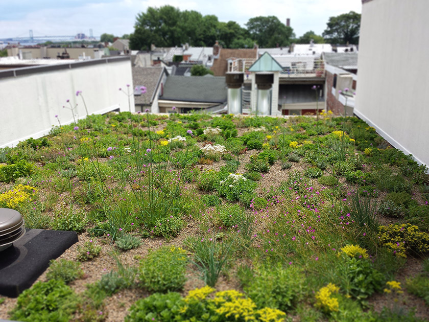 4 3 Green Roofs Philadelphia Water Stormwater Plan Review